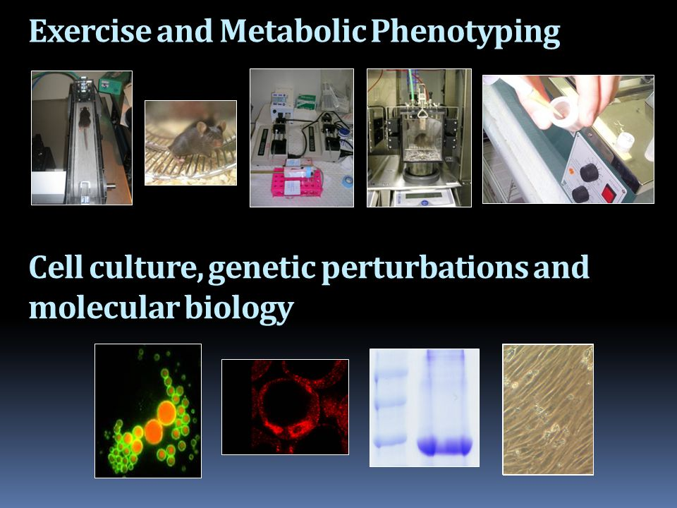 Exercise and Metabolic Phenotyping Cell culture, genetic perturbations and molecular biology