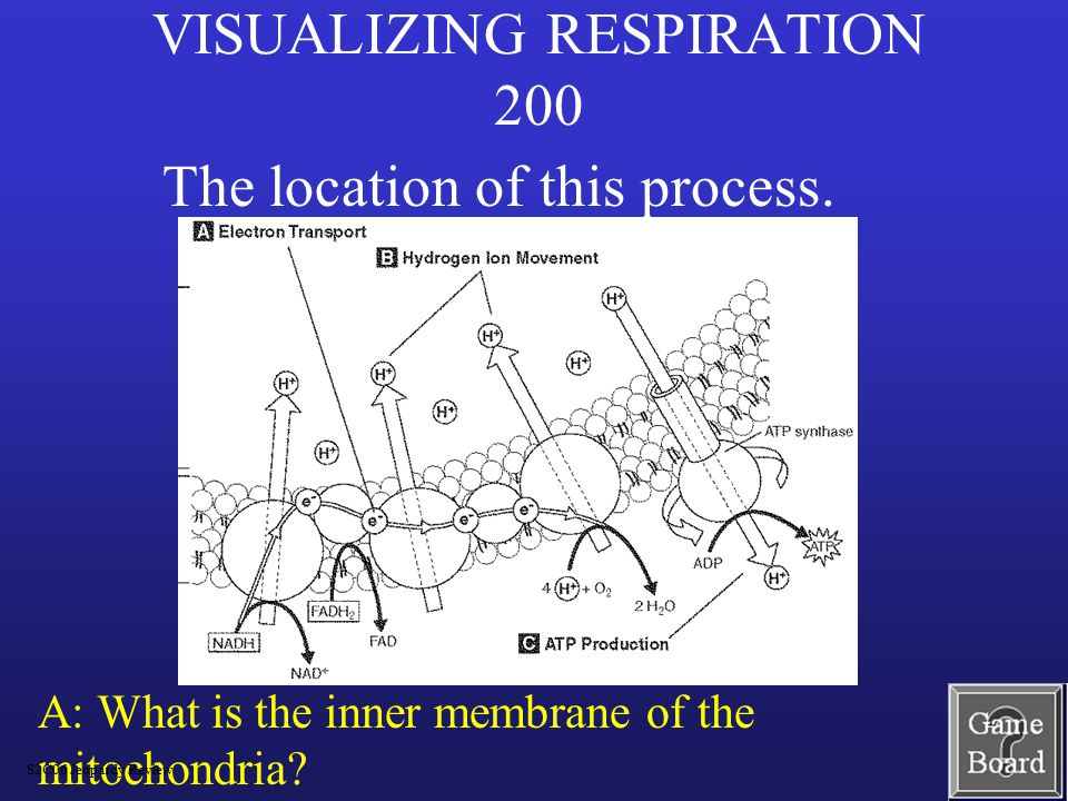 VISUALIZING RESPIRATION 200 A: What is the inner membrane of the mitochondria.