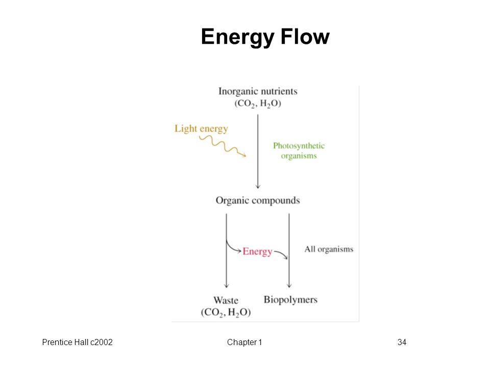 Prentice Hall c2002Chapter 134 Energy Flow