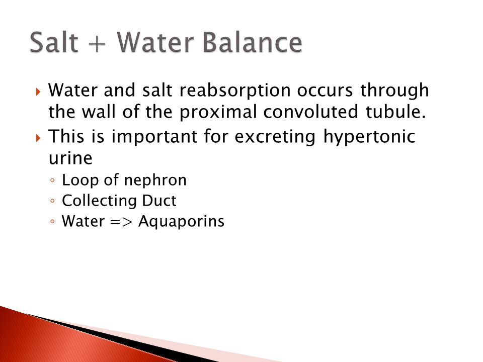  Water and salt reabsorption occurs through the wall of the proximal convoluted tubule.  This is important for excreting hypertonic urine ◦ Loop of
