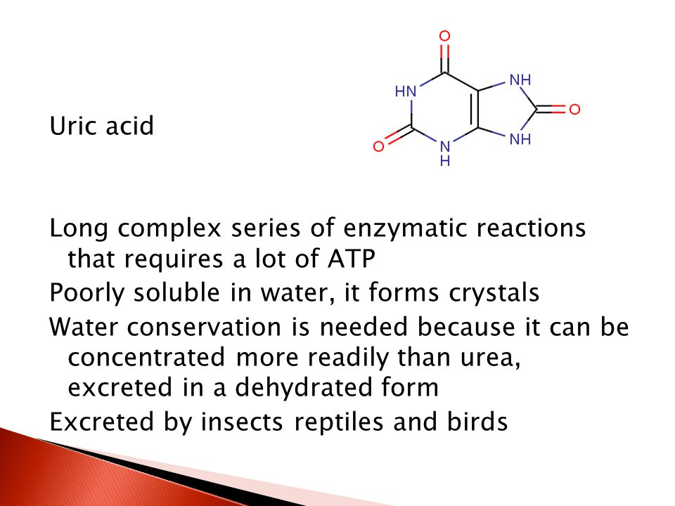 Uric acid Long complex series of enzymatic reactions that requires a lot of ATP Poorly soluble in water, it forms crystals Water conservation is neede