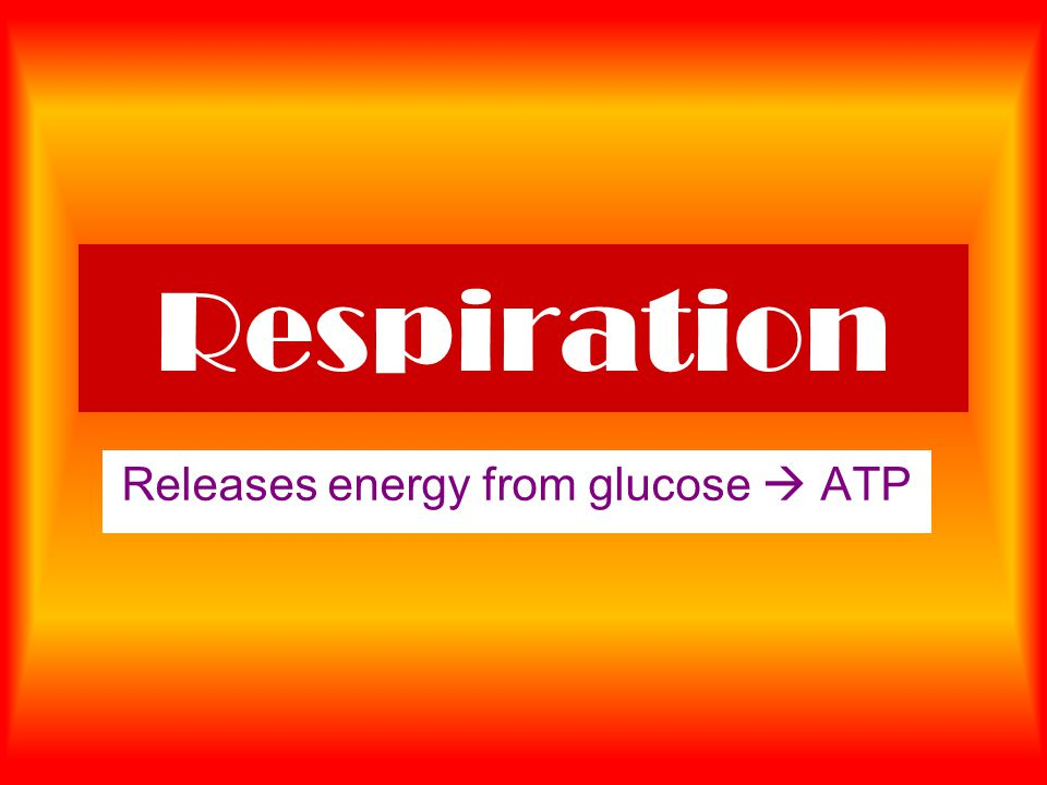 Respiration Releases energy from glucose  ATP