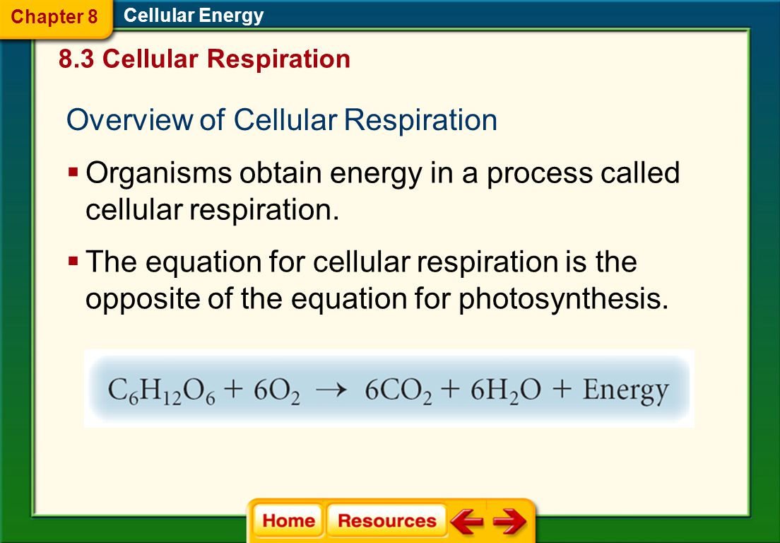 Cellular Energy 8.2 Photosynthesis Alternative Pathways  C 4 plants  CAM plants Chapter 8
