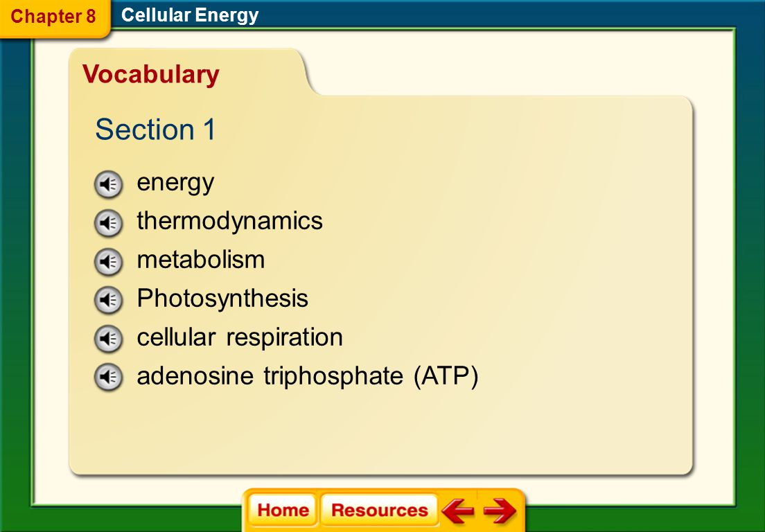 Cellular Energy Image Bank Chapter 8