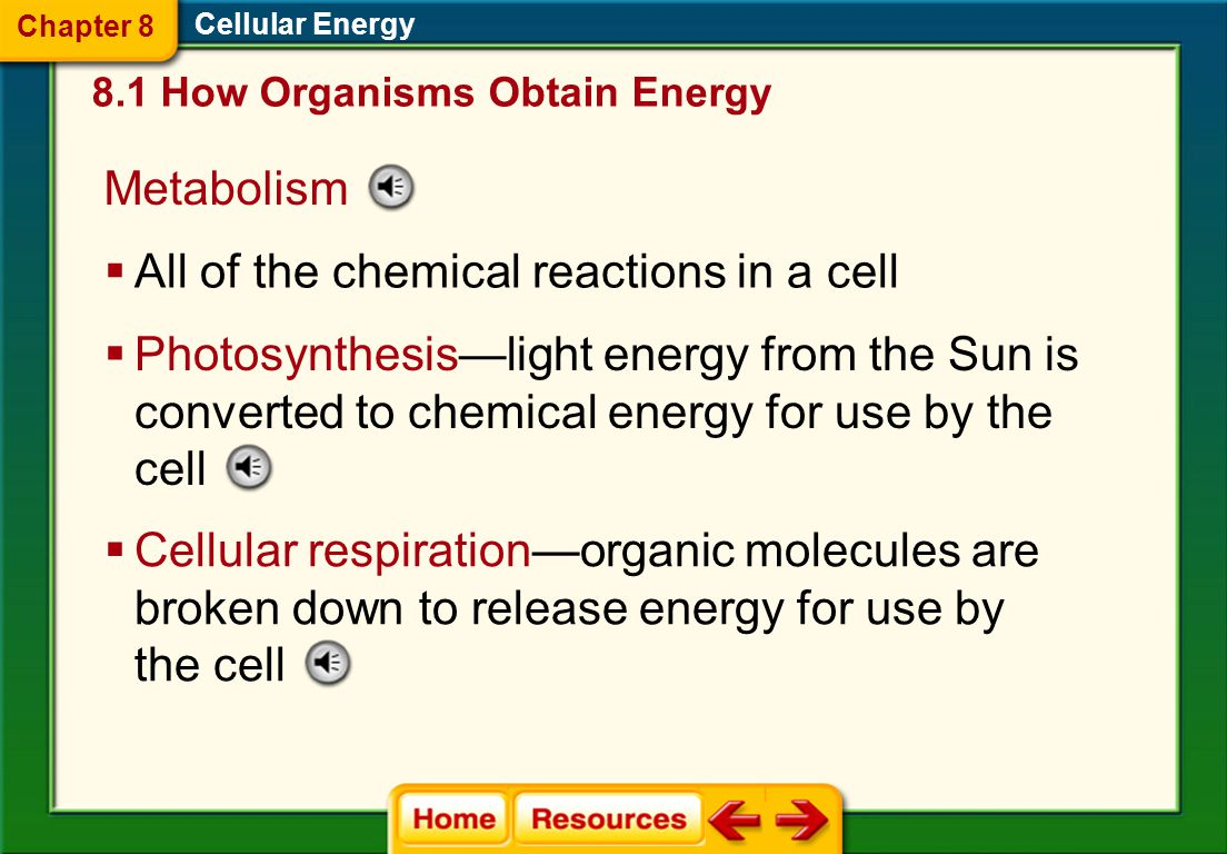 Autotrophs and Heterotrophs  Autotrophs are organisms that make their own food. 8.1 How Organisms Obtain Energy Cellular Energy  Heterotrophs are or