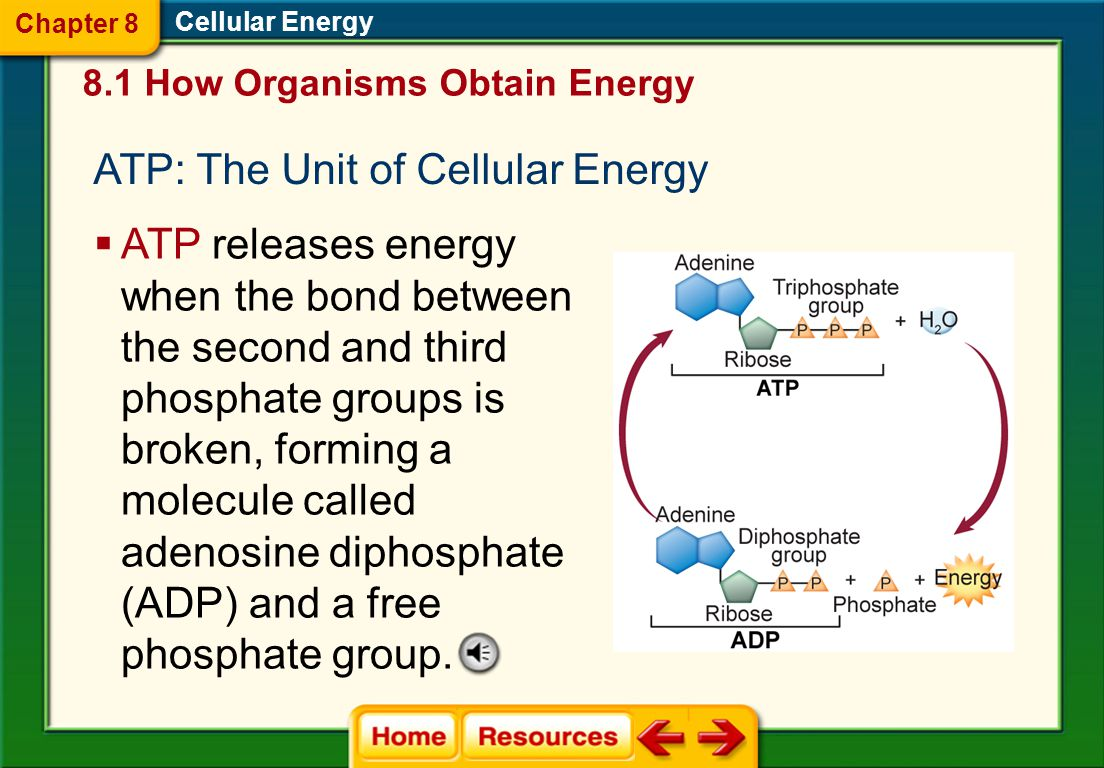 A.NADPH B. ATP C. chloroplast D. glucose At the end of the Calvin cycle, where is energy stored.