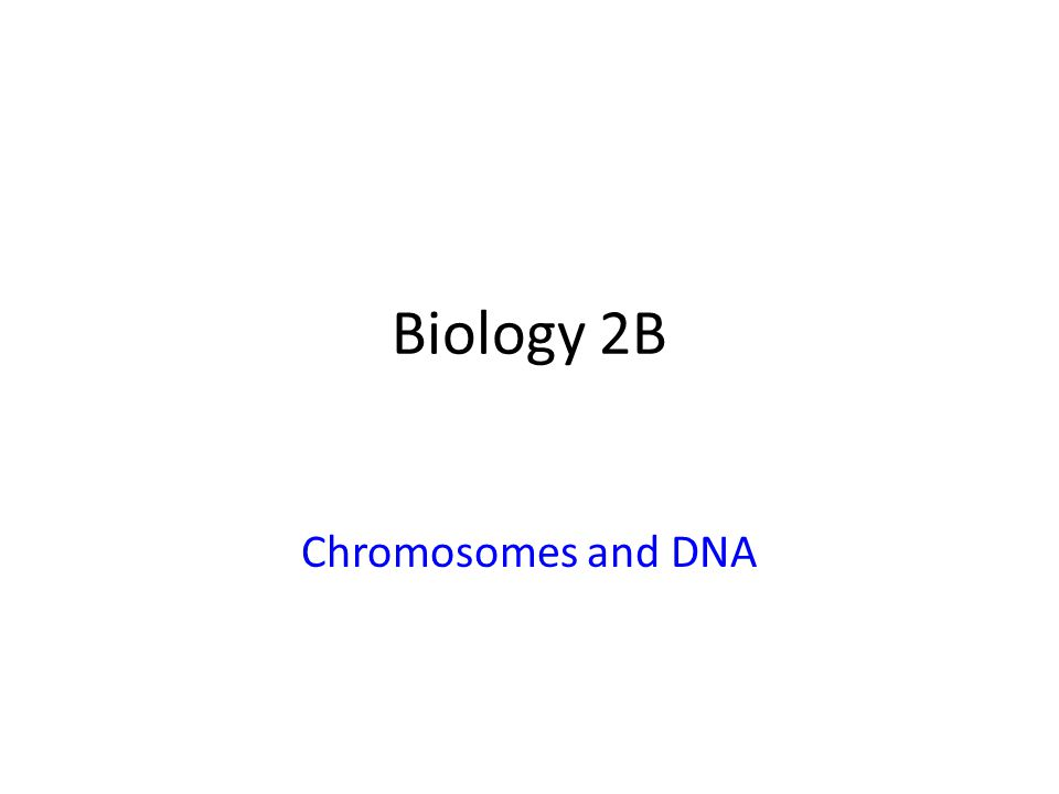 Biology 2B Chromosomes and DNA
