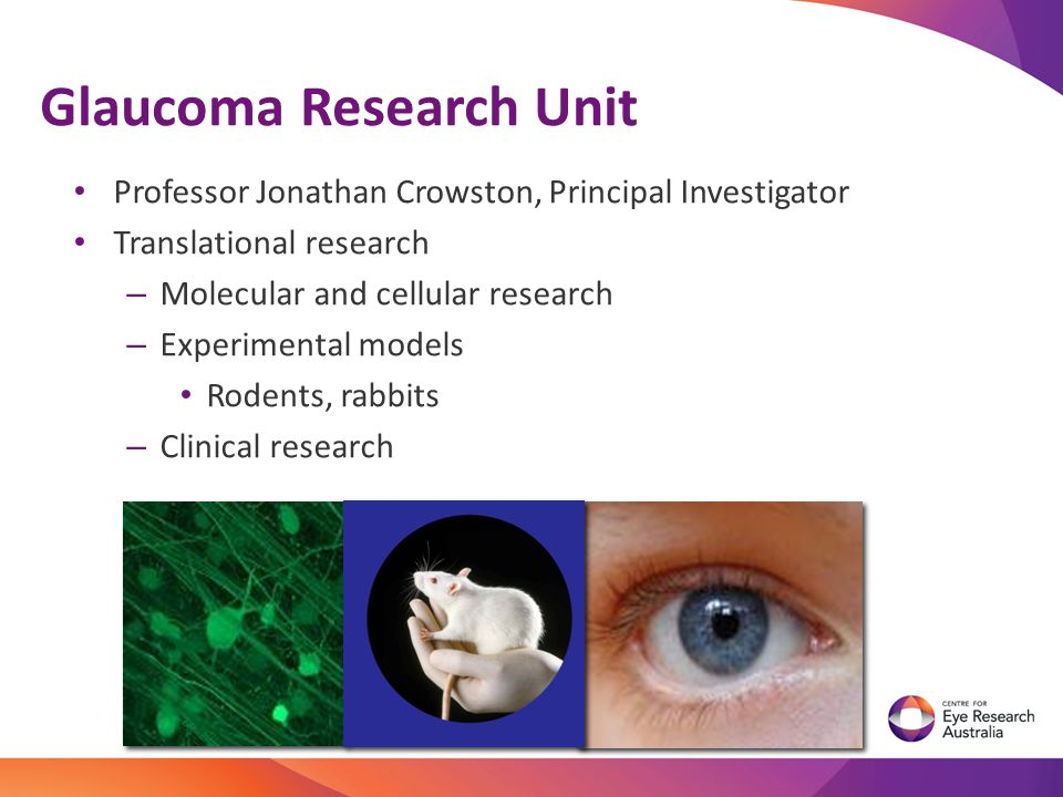 Professor Jonathan Crowston, Principal Investigator Translational research – Molecular and cellular research – Experimental models Rodents, rabbits –