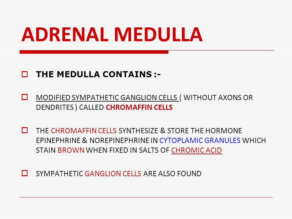 ADRENAL MEDULLA  THE MEDULLA CONTAINS :-  MODIFIED SYMPATHETIC GANGLION CELLS ( WITHOUT AXONS OR DENDRITES ) CALLED CHROMAFFIN CELLS  THE CHROMAFFIN CELLS SYNTHESIZE & STORE THE HORMONE EPINEPHRINE & NOREPINEPHRINE IN CYTOPLAMIC GRANULES WHICH STAIN BROWN WHEN FIXED IN SALTS OF CHROMIC ACID  SYMPATHETIC GANGLION CELLS ARE ALSO FOUND