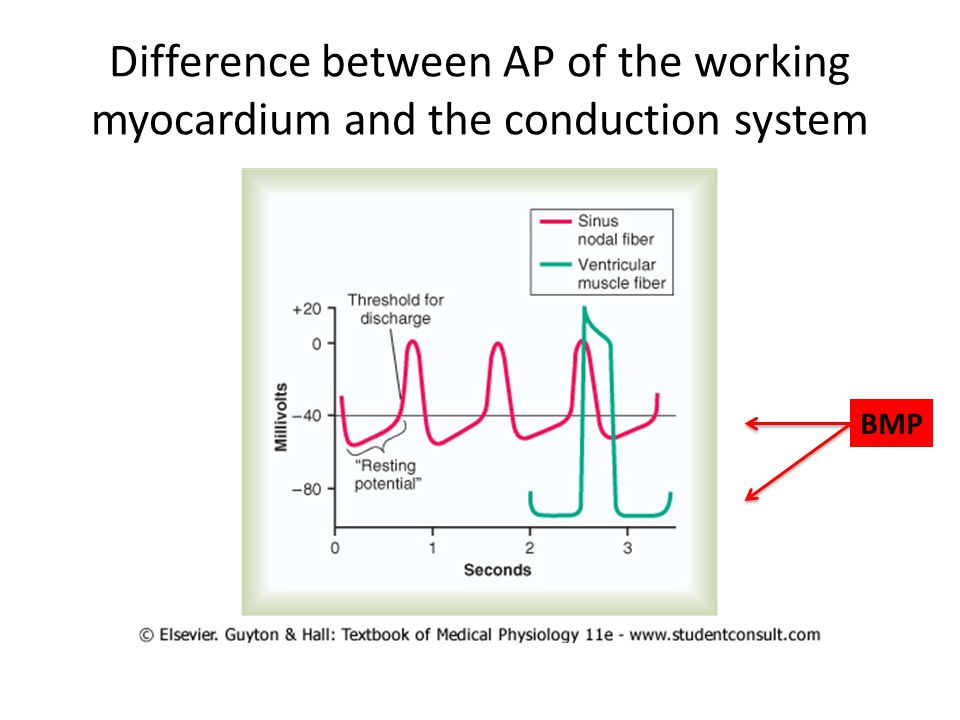 Difference between AP of the working myocardium and the conduction system BMP