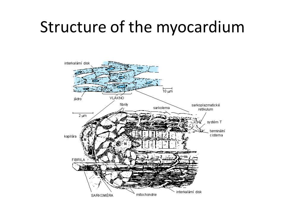 Structure of the myocardium