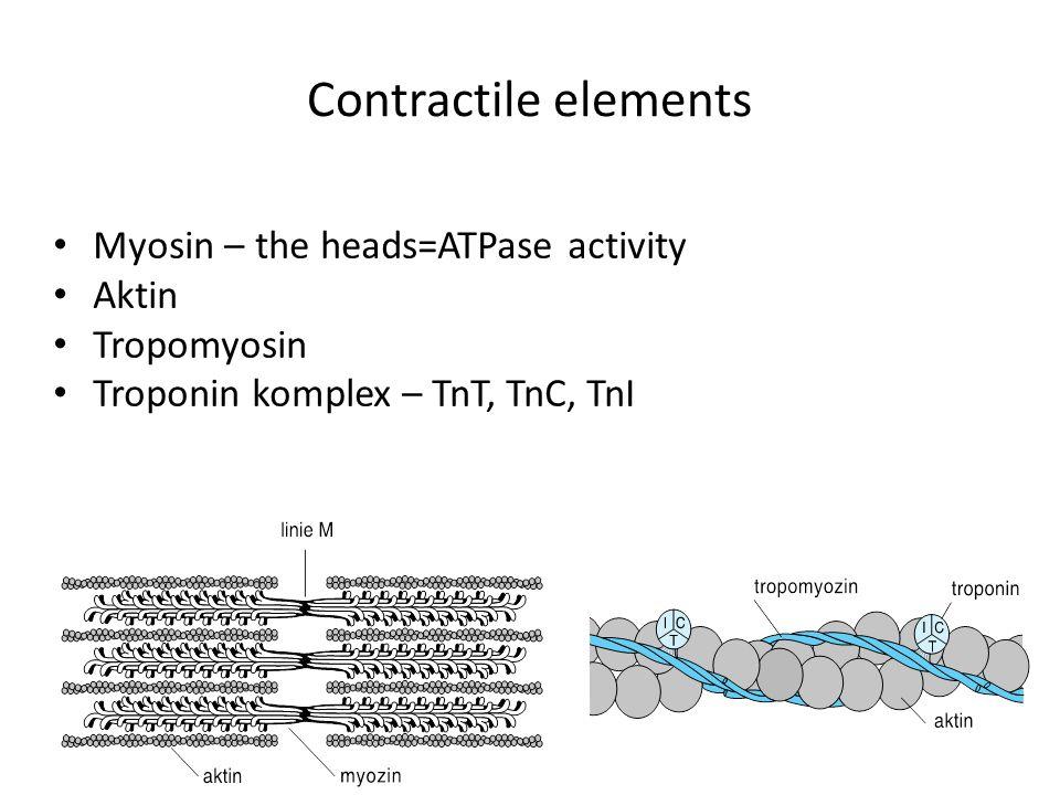 Contractile elements Myosin – the heads=ATPase activity Aktin Tropomyosin Troponin komplex – TnT, TnC, TnI