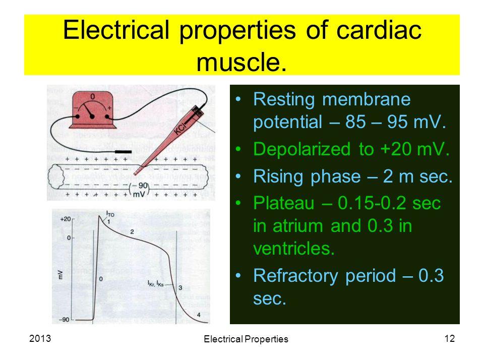 2013 Electrical Properties 12 Electrical properties of cardiac muscle. Resting membrane potential – 85 – 95 mV. Depolarized to +20 mV. Rising phase –