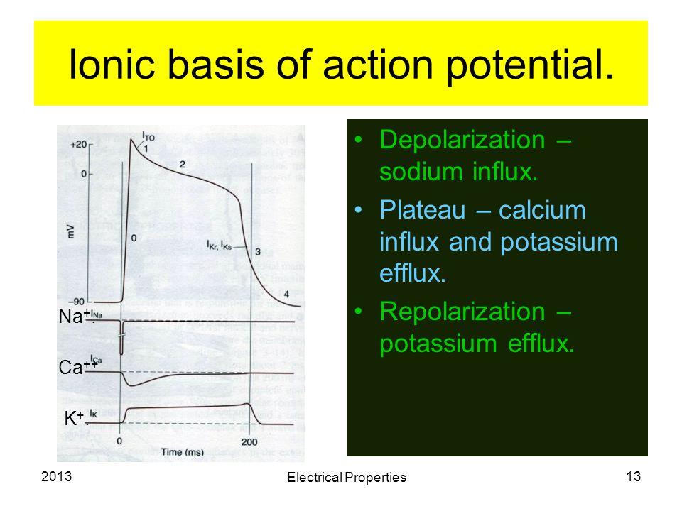 2013 Electrical Properties 13 Ionic basis of action potential. Depolarization – sodium influx. Plateau – calcium influx and potassium efflux. Repolari