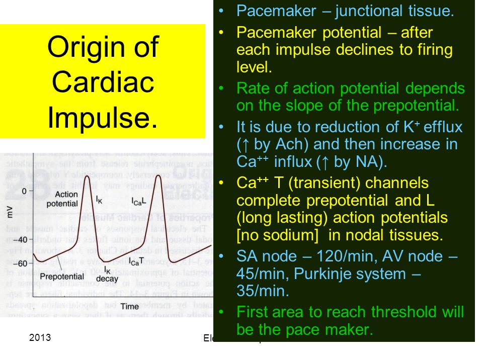 2013 Electrical Properties 14 Origin of Cardiac Impulse. Pacemaker – junctional tissue. Pacemaker potential – after each impulse declines to firing le