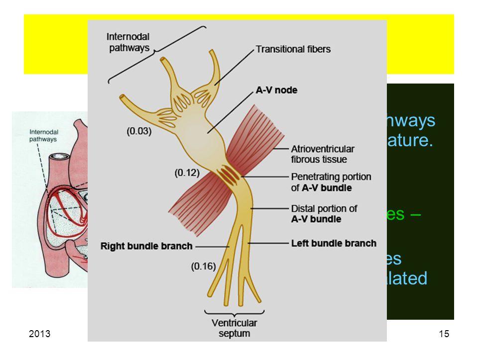 2013 Electrical Properties 15 Spread of impulse. SA node. Inter nodal pathways & atrial musculature. AV node. Bundle of His. Bundle branches – Purkinj