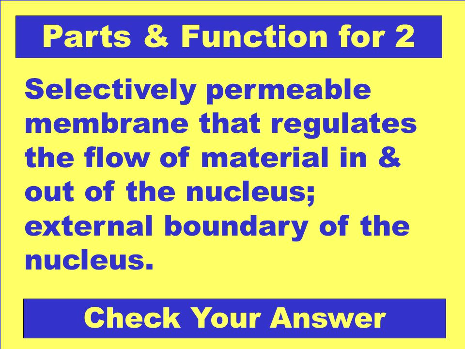 nuclear envelope Back to the Game Board Parts & Function for 2