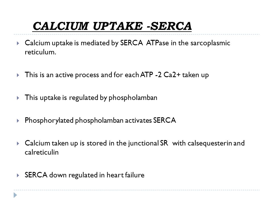 CALCIUM UPTAKE - SERCA  Calcium uptake is mediated by SERCA ATPase in the sarcoplasmic reticulum.  This is an active process and for each ATP -2 Ca2