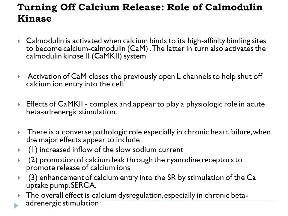 Turning Off Calcium Release: Role of Calmodulin Kinase  Calmodulin is activated when calcium binds to its high-affinity binding sites to become calci
