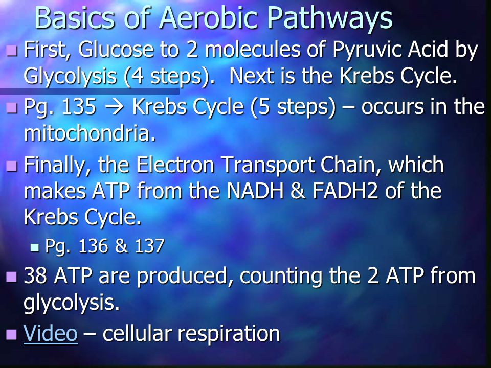 Basics of Aerobic Pathways First, Glucose to 2 molecules of Pyruvic Acid by Glycolysis (4 steps).