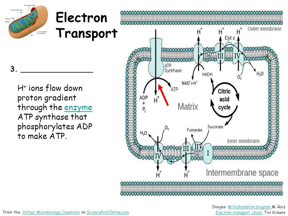 Electron Transport 3.