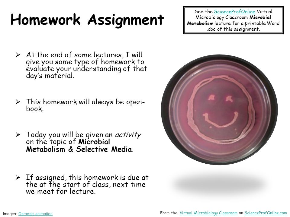 Homework Assignment  At the end of some lectures, I will give you some type of homework to evaluate your understanding of that day's material.