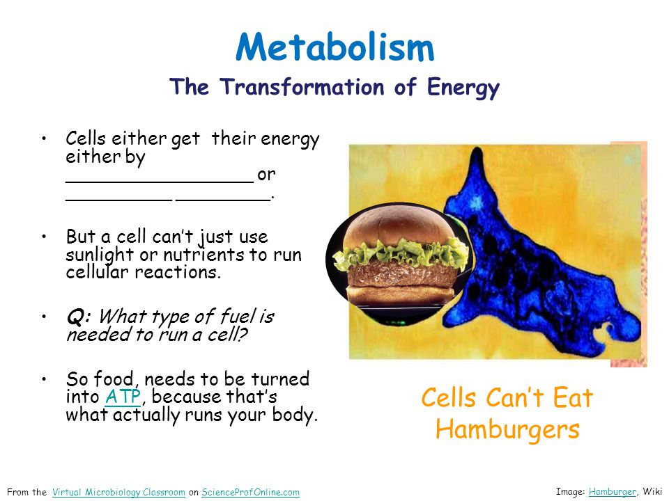 Metabolism The Transformation of Energy Cells either get their energy either by ________________ or _________ ________.