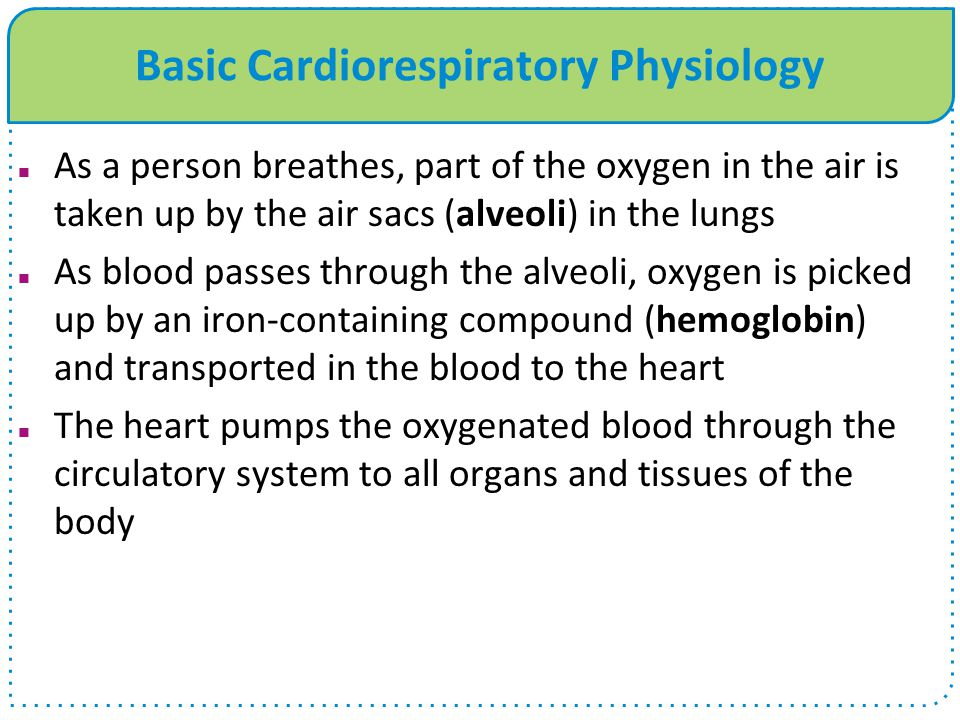 Basic Cardiorespiratory Physiology As a person breathes, part of the oxygen in the air is taken up by the air sacs (alveoli) in the lungs As blood pas