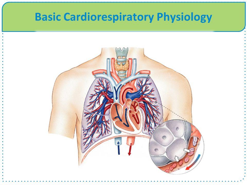 Basic Cardiorespiratory Physiology
