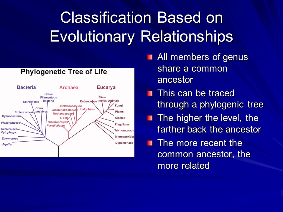 Classification Based on Evolutionary Relationships All members of genus share a common ancestor This can be traced through a phylogenic tree The higher the level, the farther back the ancestor The more recent the common ancestor, the more related