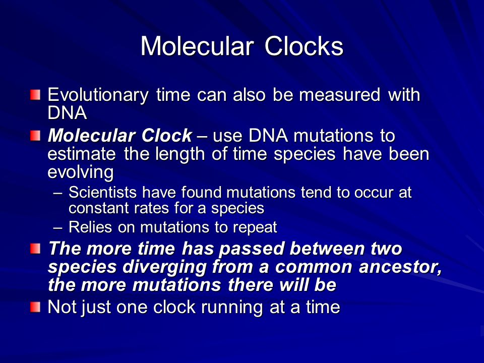 Molecular Clocks Evolutionary time can also be measured with DNA Molecular Clock – use DNA mutations to estimate the length of time species have been evolving –Scientists have found mutations tend to occur at constant rates for a species –Relies on mutations to repeat The more time has passed between two species diverging from a common ancestor, the more mutations there will be Not just one clock running at a time