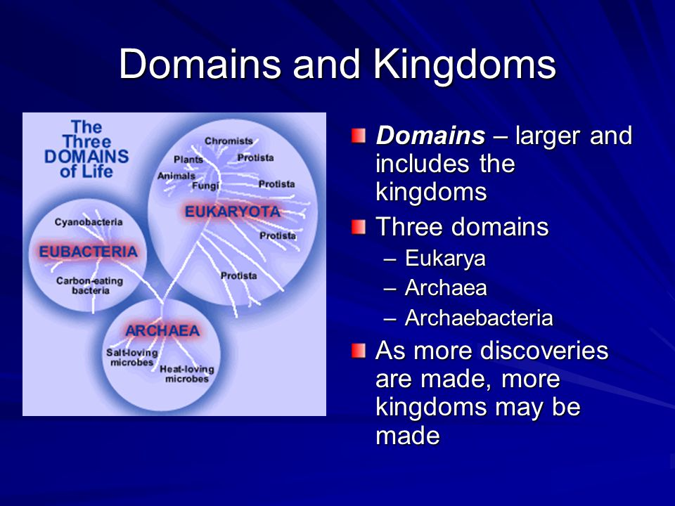 Domains and Kingdoms Domains – larger and includes the kingdoms Three domains –Eukarya –Archaea –Archaebacteria As more discoveries are made, more kingdoms may be made