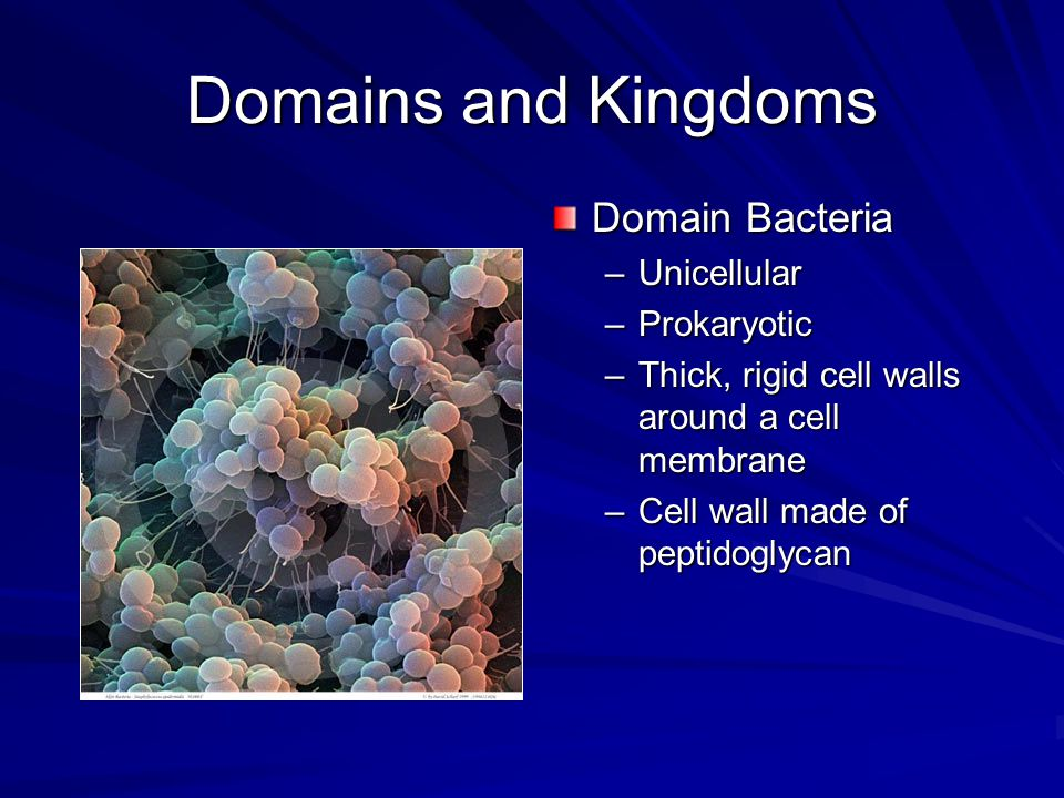 Domains and Kingdoms Domain Bacteria –Unicellular –Prokaryotic –Thick, rigid cell walls around a cell membrane –Cell wall made of peptidoglycan