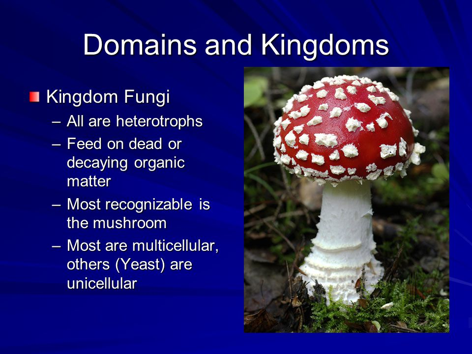 Domains and Kingdoms Kingdom Fungi –All are heterotrophs –Feed on dead or decaying organic matter –Most recognizable is the mushroom –Most are multice