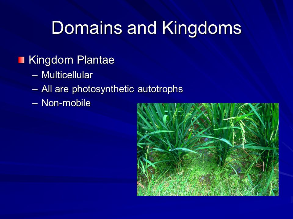 Domains and Kingdoms Kingdom Plantae –Multicellular –All are photosynthetic autotrophs –Non-mobile