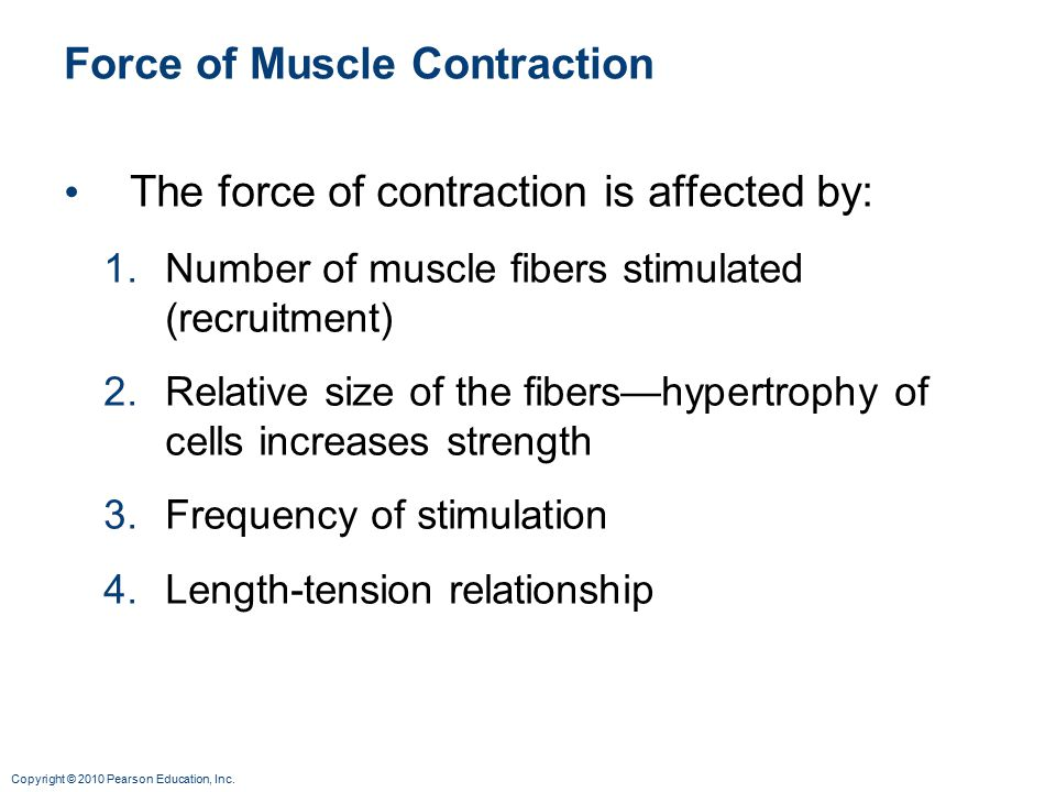 Copyright © 2010 Pearson Education, Inc. Force of Muscle Contraction The force of contraction is affected by: 1.Number of muscle fibers stimulated (re