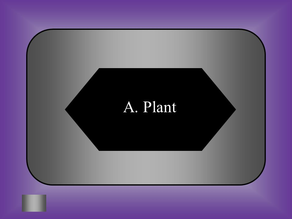 A:B: PlantAnimal #9 Photosynthesis occurs in what type of cell? C:D: MitochondriaVacuole