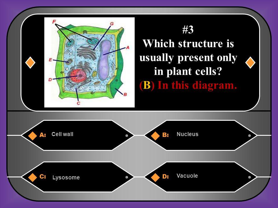 B. Cells
