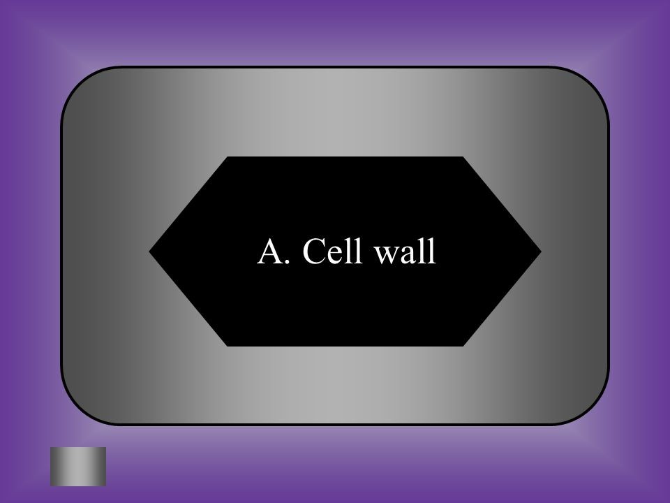 A:B: Cell wallNucleus C:D: Lysosome Vacuole #3 Which structure is usually present only in plant cells.