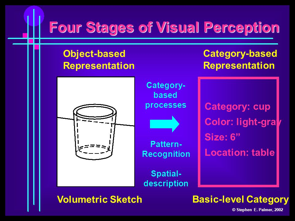 Four Stages of Visual Perception © Stephen E.