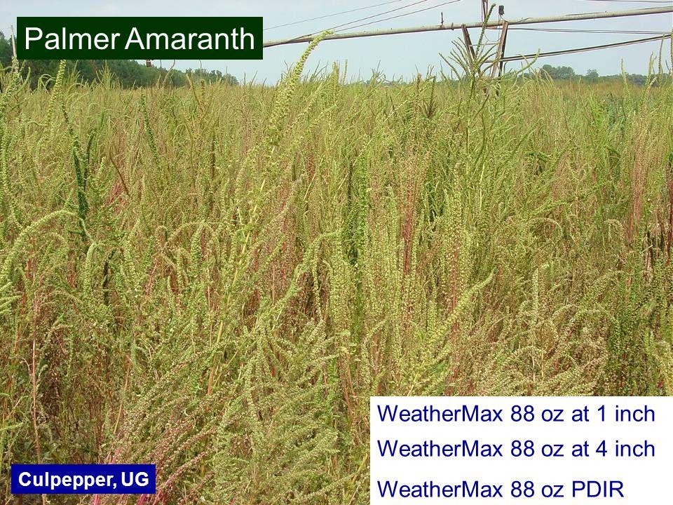 WeatherMax 88 oz at 1 inch WeatherMax 88 oz at 4 inch WeatherMax 88 oz PDIR Culpepper, UG Palmer Amaranth