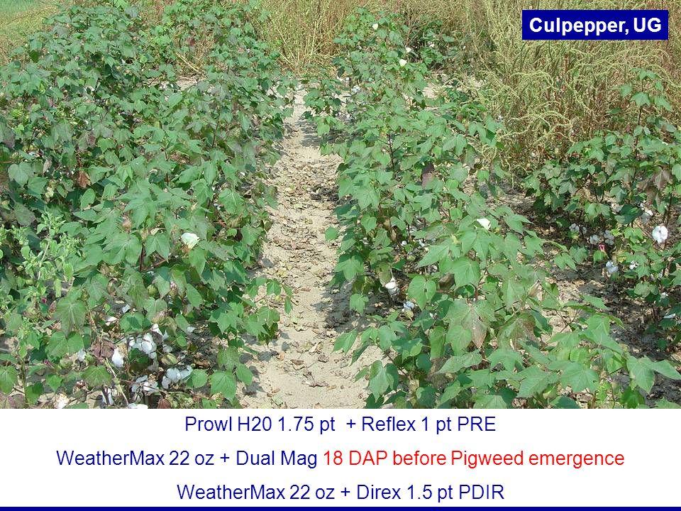 Prowl H20 1.75 pt + Reflex 1 pt PRE WeatherMax 22 oz + Dual Mag 18 DAP before Pigweed emergence WeatherMax 22 oz + Direx 1.5 pt PDIR Culpepper, UG