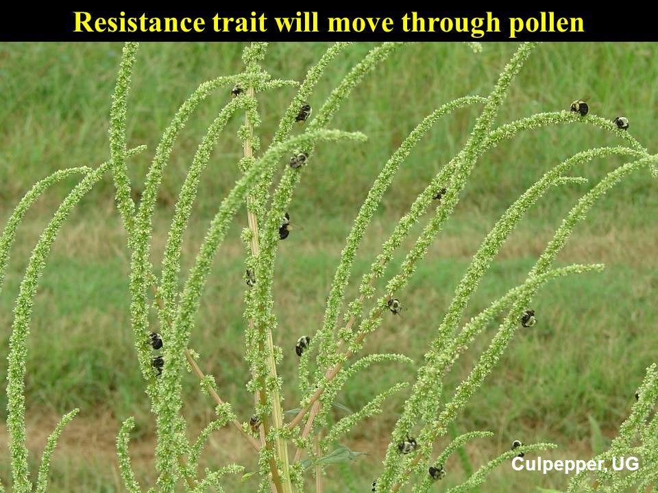 Resistance trait will move through pollen Culpepper, UG