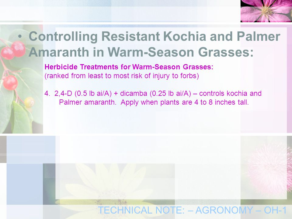 Controlling Resistant Kochia and Palmer Amaranth in Warm-Season Grasses: Herbicide Treatments for Warm-Season Grasses: (ranked from least to most risk of injury to forbs) 4.