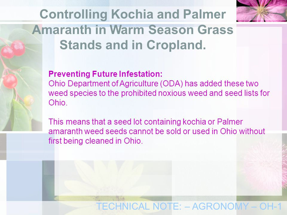 Preventing Future Infestation: Ohio Department of Agriculture (ODA) has added these two weed species to the prohibited noxious weed and seed lists for Ohio.
