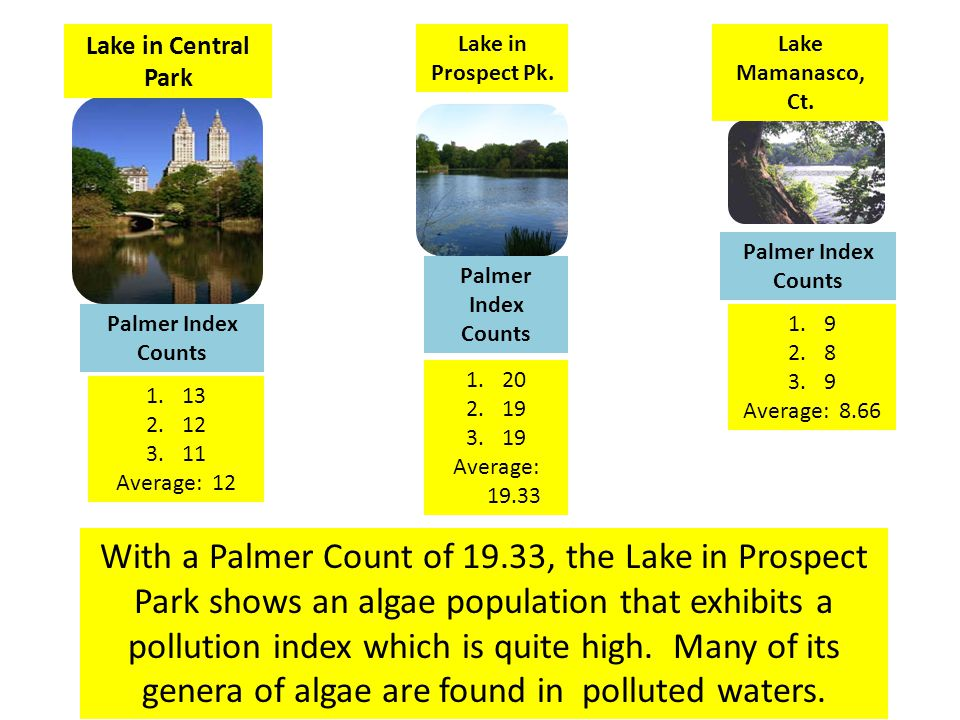 Palmer Index Scores Average of 3 calculated Palmer Pollution Index Scores for the 3 Lakes ( 12 ) ( 19.33 ) ( 8.66 )