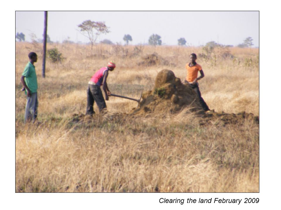 Clearing the land February 2009