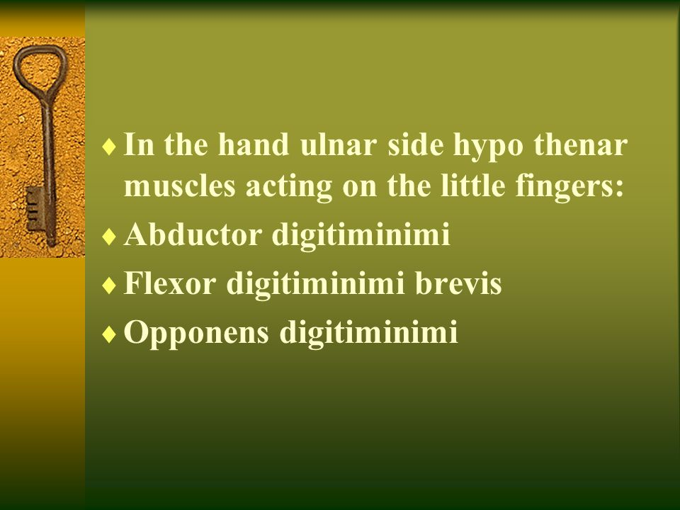  In the hand ulnar side hypo thenar muscles acting on the little fingers:  Abductor digitiminimi  Flexor digitiminimi brevis  Opponens digitiminim