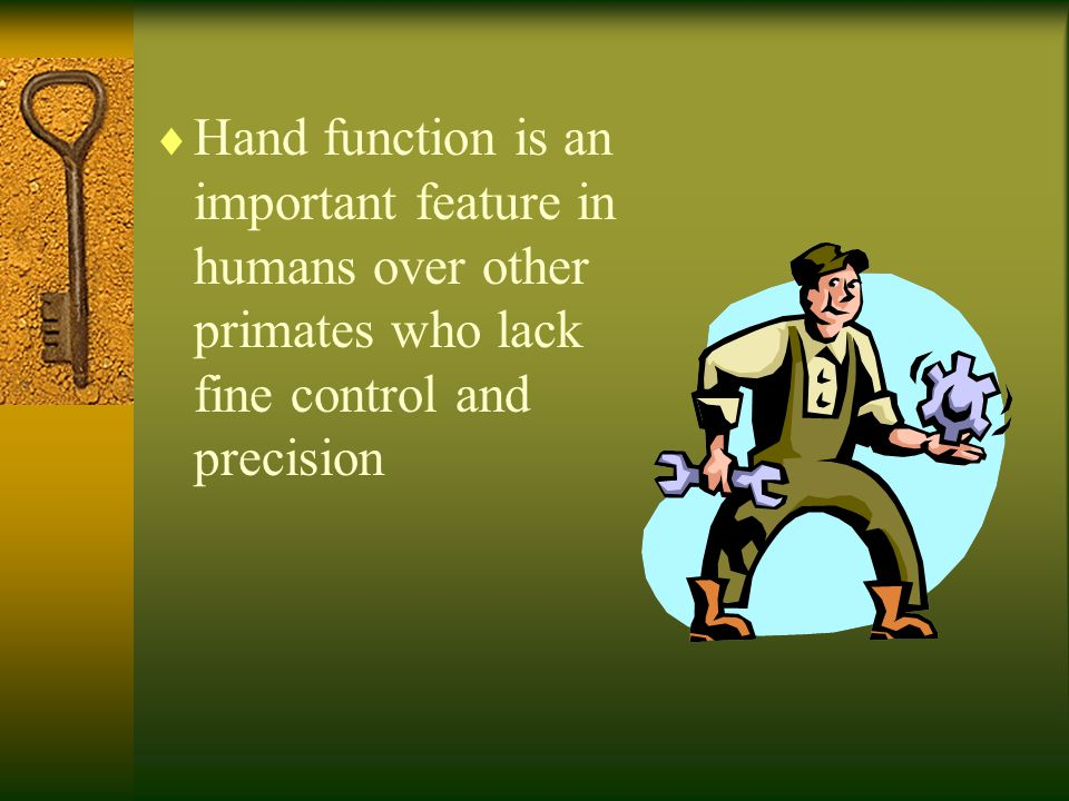 Hand function is an important feature in humans over other primates who lack fine control and precision