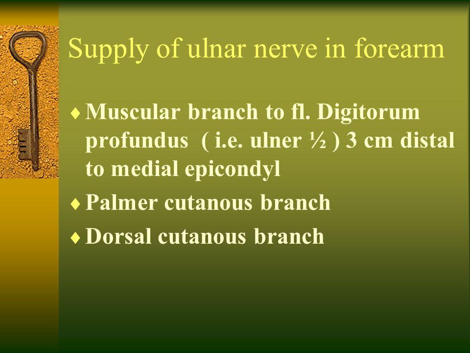 Supply of ulnar nerve in forearm  Muscular branch to fl. Digitorum profundus ( i.e. ulner ½ ) 3 cm distal to medial epicondyl  Palmer cutanous branc